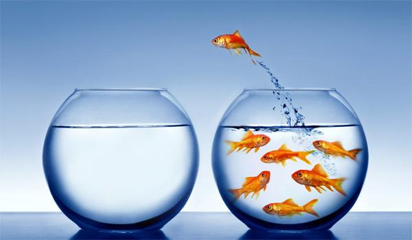 challenge_poissons