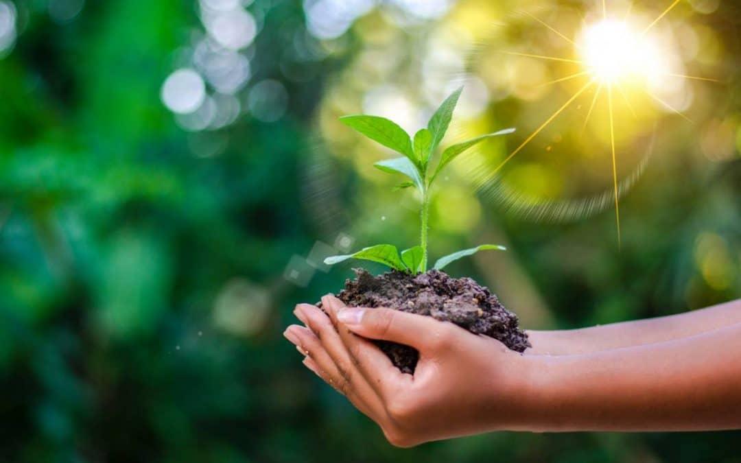 La norme ISO 14001 pour une entreprise plus verte
